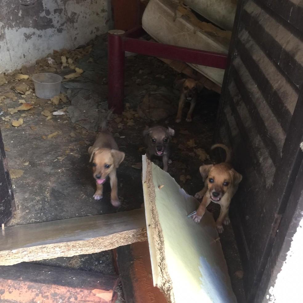 Animais estavam desnutridos — Foto: Projeto Lunaar/Divulgação