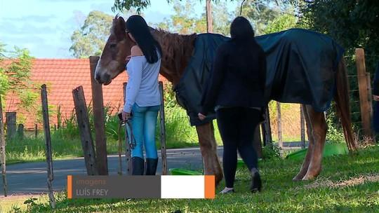 ONG de Santo Ângelo se dedica a resgatar e reabilitar cavalos em situação de maus-tratos