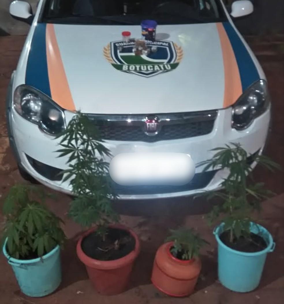Na casa do suspeito, foram encontrados quatro vasos com pés de maconha em Botucatu — Foto: Guarda Civil Municipal deBotucatu/Divulgação