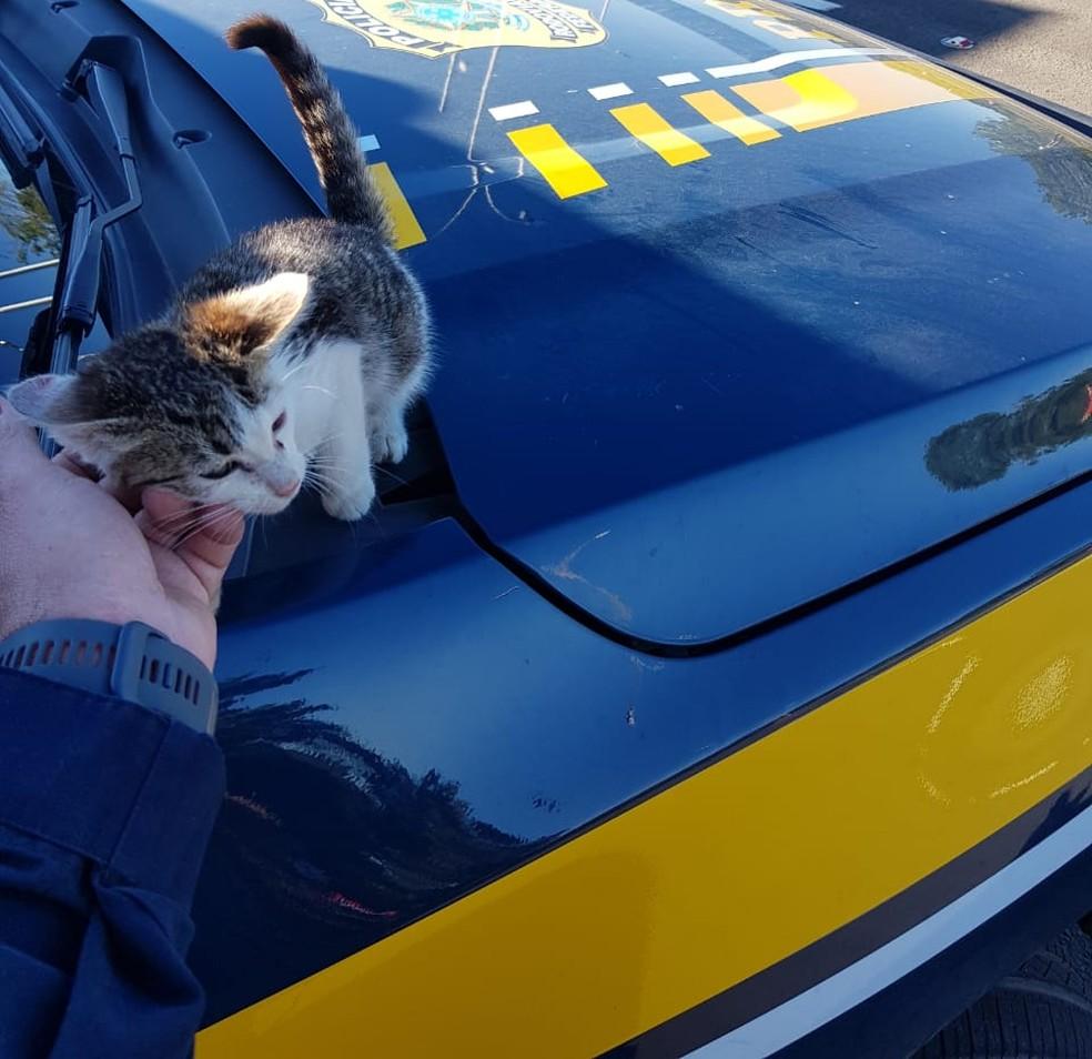 Gato resgatado após ser arremessado pela janela de carro na BR-116 em SC — Foto: PRF/Divulgação