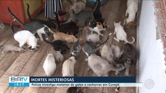 Em 15 dias, 20 cães e gatos morrem misteriosamente na BA; um deles foi achado pendurado em árvore