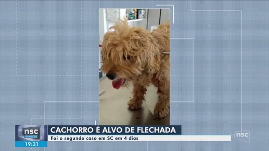Cachorra é atingida por flecha de 45 cm e sobrevive após cirurgia em SC