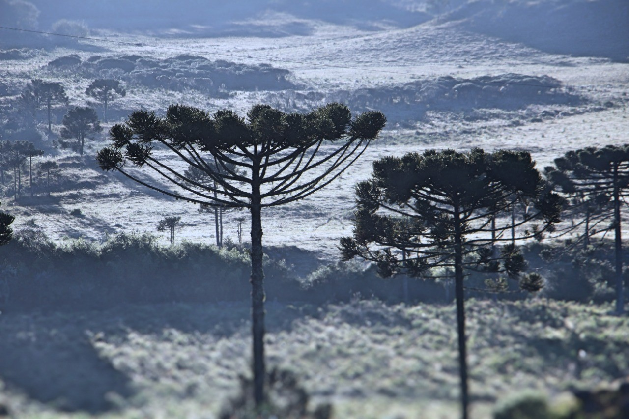 Serra catarinense registra geada e temperaturas abaixo de 4°C
