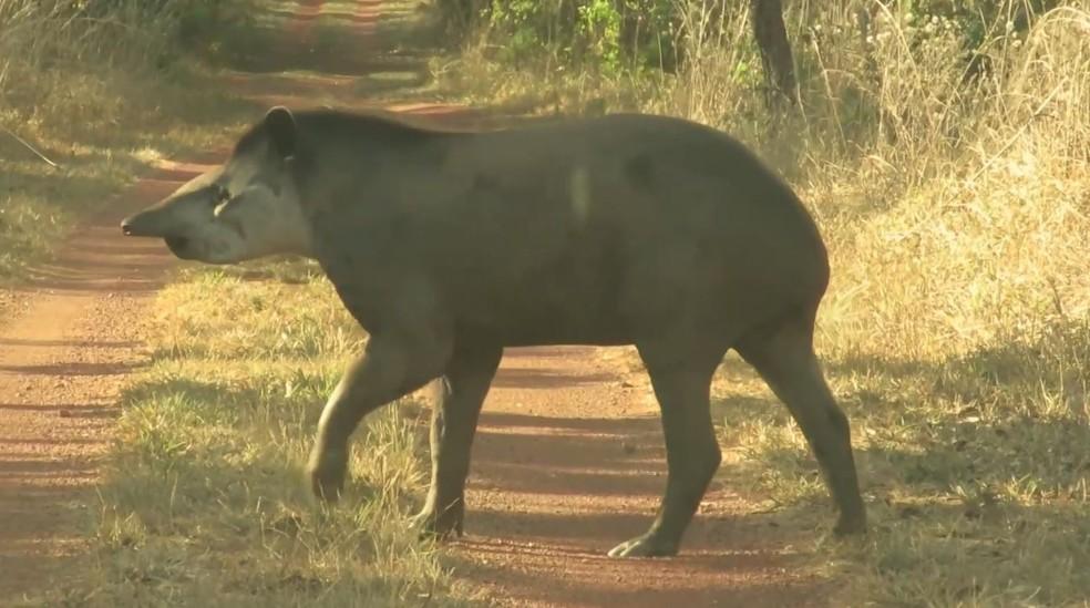 A aparição dos animais mostra que o trabalho de preservação tem dado resultados positivos — Foto: Terra da Gente