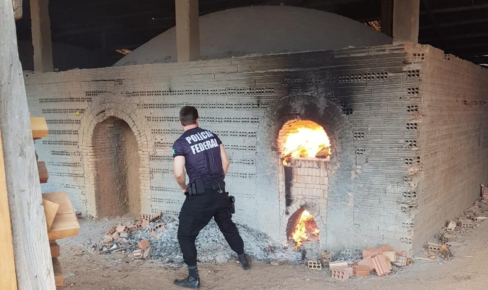Quase meia tonelada foi incinerada  — Foto: PF/ Divulgação