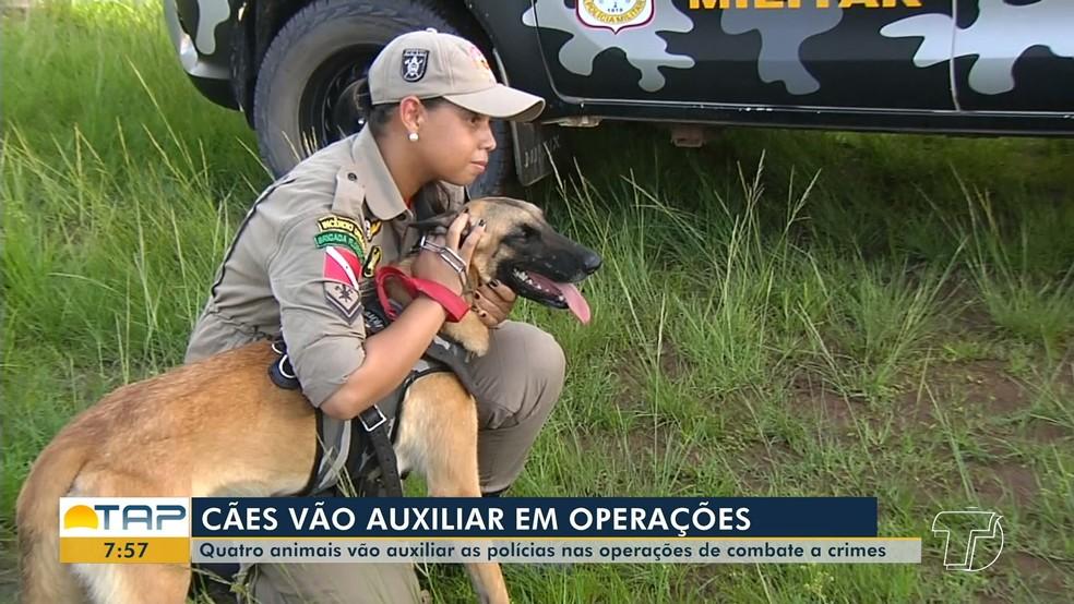 Cães vão auxiliar no combater ao tráfico de drogas em Santarém — Foto: Reprodução/Tv Tapajós