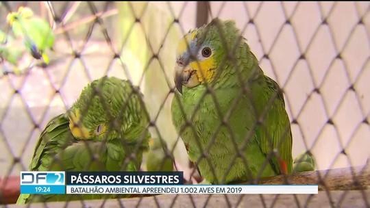 Mais de 1 mil pássaros foram apreendidos no primeiro trimestre de 2019 no DF