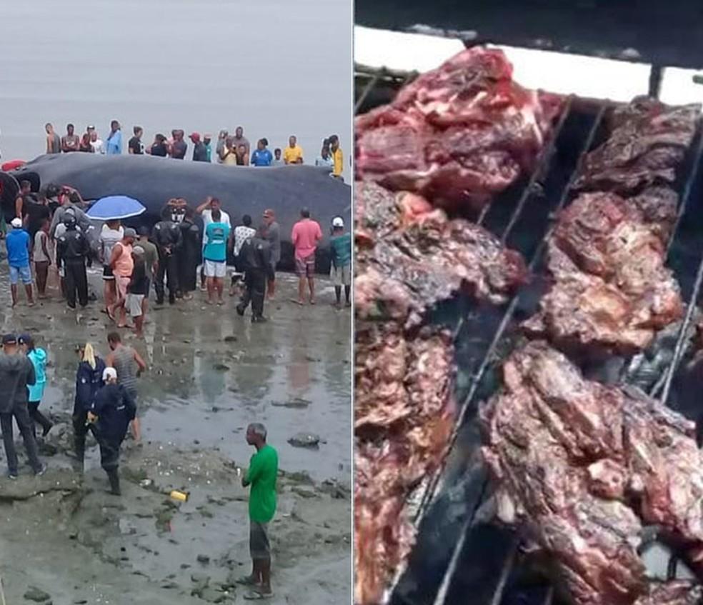 Baleia que morreu tinha 39 toneladas e moradores da região pegaram carne para fazer churrasco — Foto: Arte/ G1