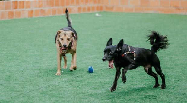 Espaço pode receber centenas de cães (Foto: Divulgação)
