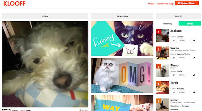 Klooff: uma rede social para cães e gatos (Foto: Reprodução/Edivaldo Brito)