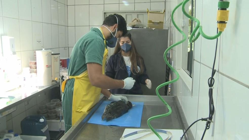 Técnicos realizam necrópsia para descobrir causas da morte de animais (Foto: Reprodução/TV Tribuna)