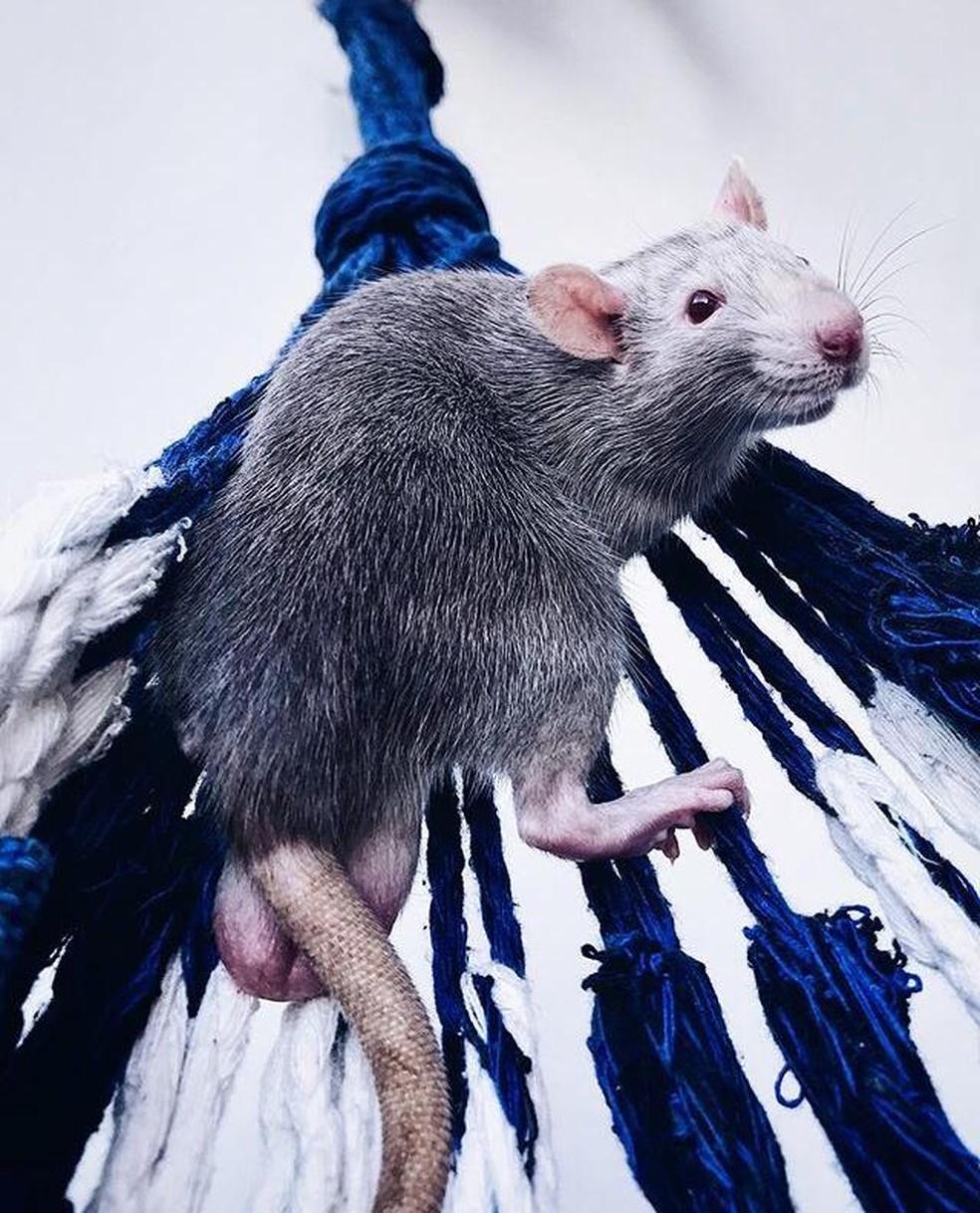Ela gosta de fotografar os momentos que passa com os ratos. — Foto: Arquivo pessoal