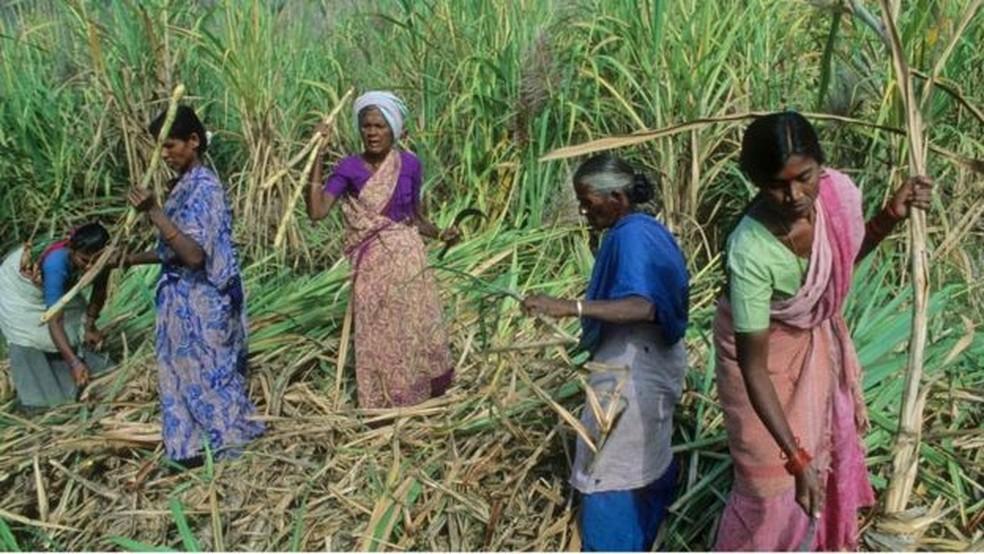 Estudo com cortadores de cana na Índia ajudou a entender por que pessoas pobres tomam decisões ruins com seu dinheiro. — Foto: Getty Images