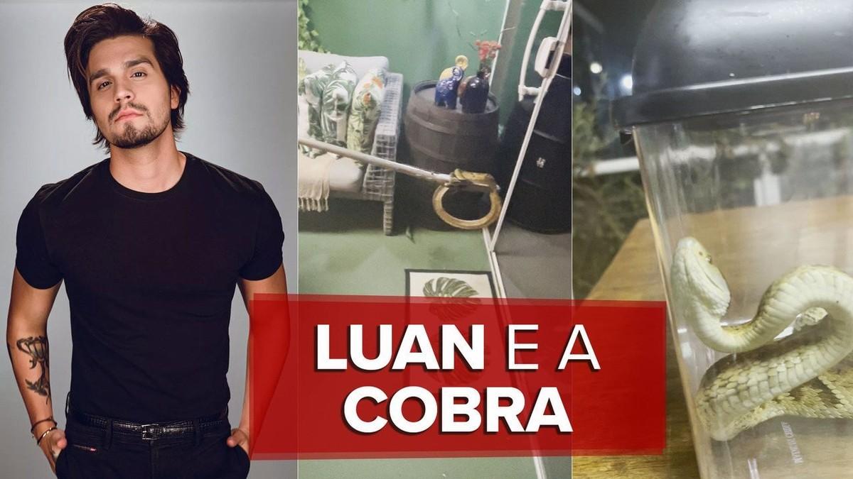 Luan Santana acha cobra em sua casa: 'Minha preocupação foi devolver o animal ao seu habitat'; veja vídeo