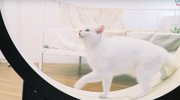 esteira gato  (Foto: Reprodução/YouTube)