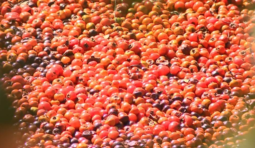 Produtores da região relatam queda no preço das frutas e temem perda de safra