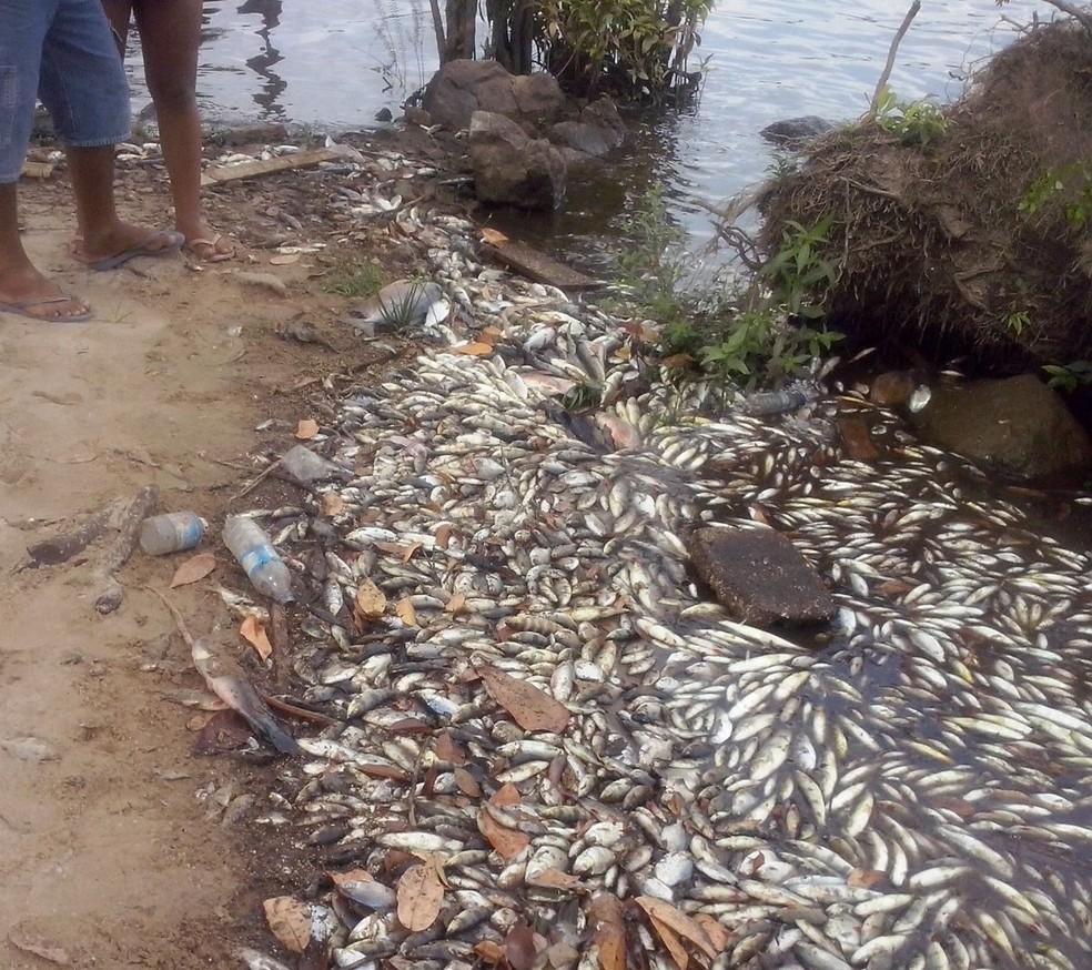Em diferentes dias, a orla de Ferreira Gomes amanhecia cheia de peixes mortos (Foto: Moroni Guimarães/Arquivo Pessoal)