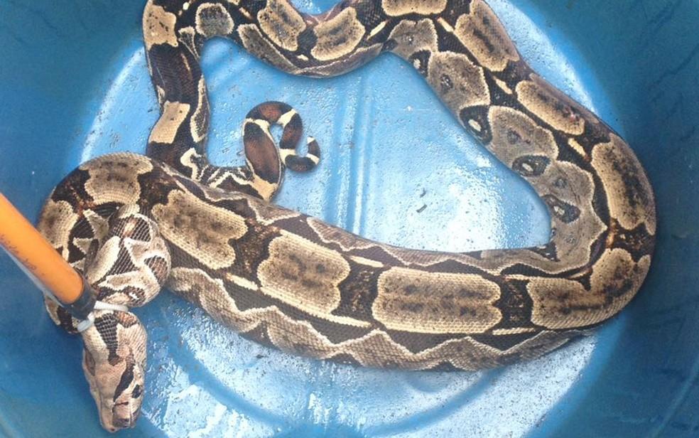 Cobra foi encontrada em quintal de casa no Ipsep, na Zona Sul do Recife (Foto: ReproduA�A?o/WhatsApp)