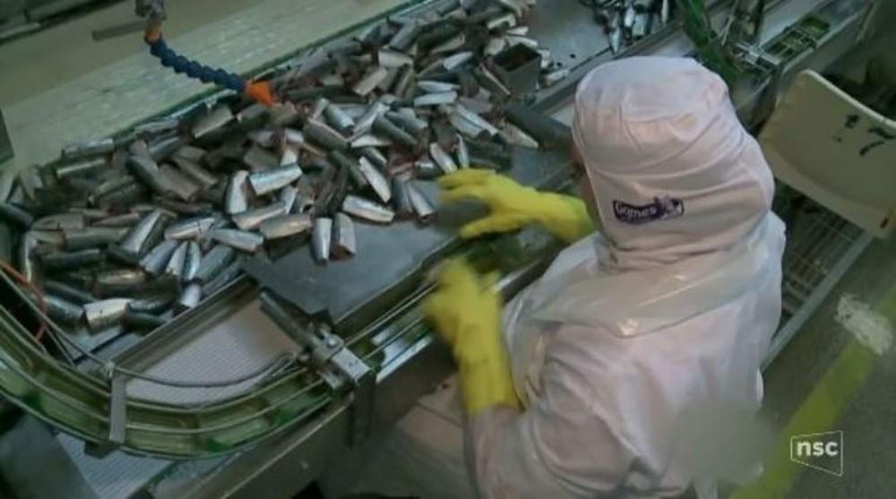 Maior empresa enlatadora de pescados da América Latina paralisa produção em Itajaí