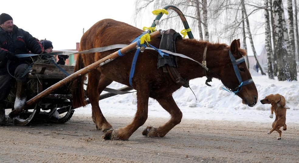 Cachorro corre para cheirar o focinho de um cavalo no momento em que o equino escorregou na pista coberta de neve em quanto puxava um trenó na vila de Martsiyanauka, Ucrânia, durante festa do feriado local conhecido como Kolyada — Foto: Sergei Gapon/AFP/Arquivo