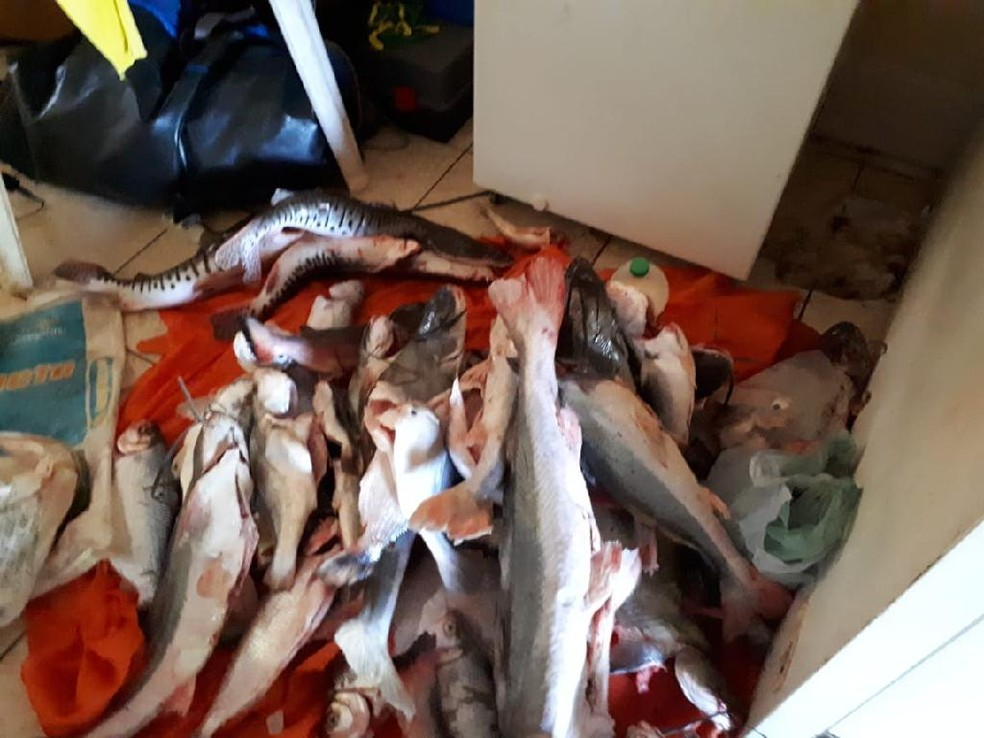 Pescado foi apreendido no Rio Culuene em Canarana (Foto: Sema-MT)