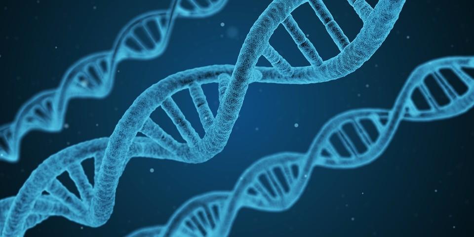 Pesquisa detecta alterações no DNA de pessoas que sofreram abusos na infância (Foto: Pixabay / qimono)
