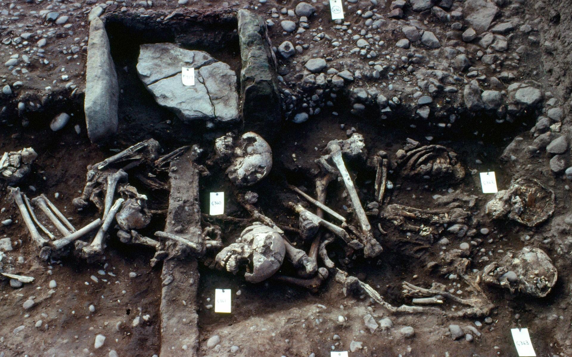 Ossadas de guerreiros vikings (Foto: Universidade de Bristol)