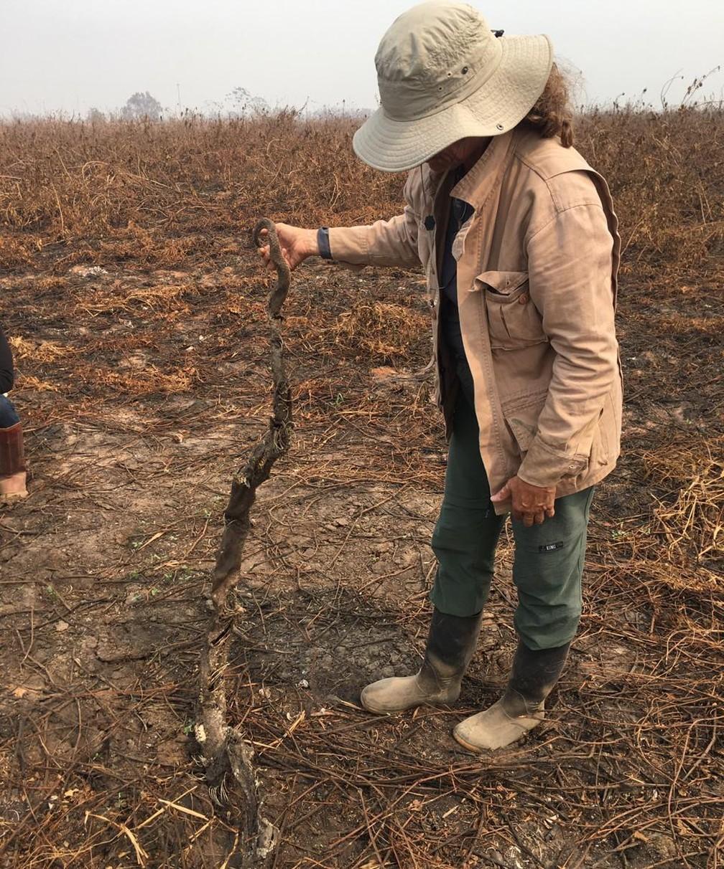 Cenário devastador no Pantanal impressiona pesquisadores — Foto: Thiago Semedo/Arquivo pessoal