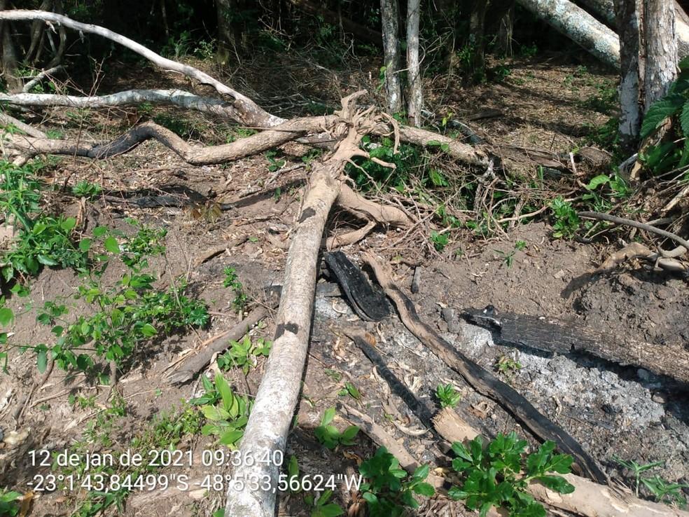Mais de 100 árvores são danificadas em Conchas — Foto: Polícia Militar Ambiental/Divulgação