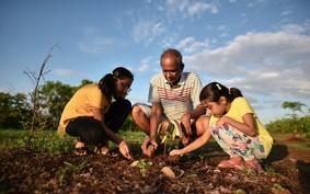 Agricultura urbana: o que é e quais os benefícios para a população