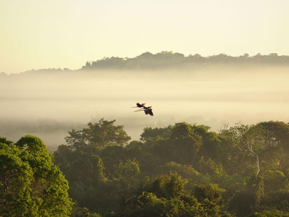 Aves sobrevoam a Floresta Amazônica (Foto: Luiz Claudio Marigo/Conservação Internacional/Divulgação)