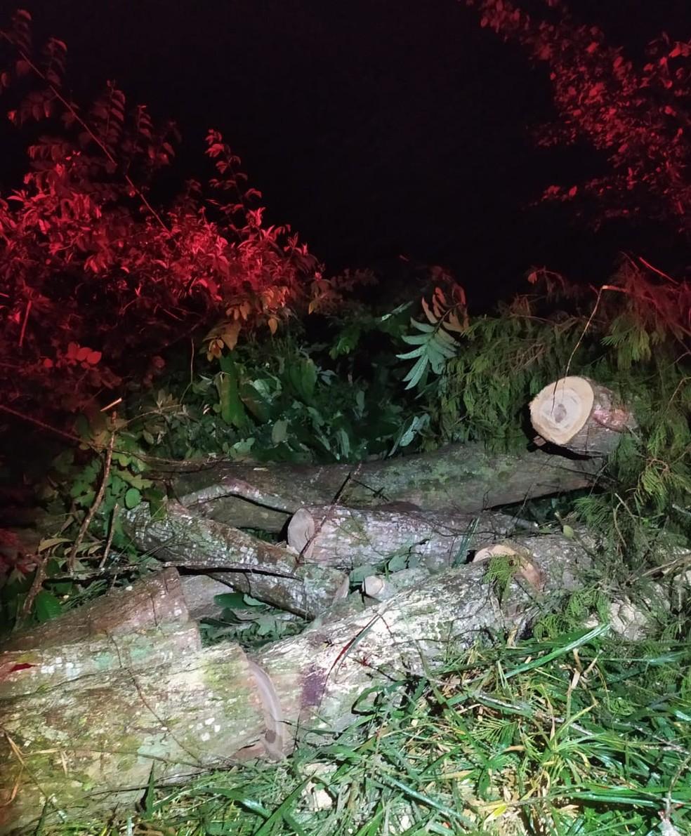 Árvore estava caída na pista — Foto: Polícia Militar/Divulgação