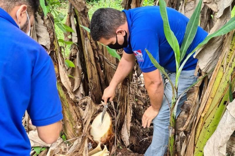 Adepará abre processo seletivo com vagas para municípios do oeste do Pará