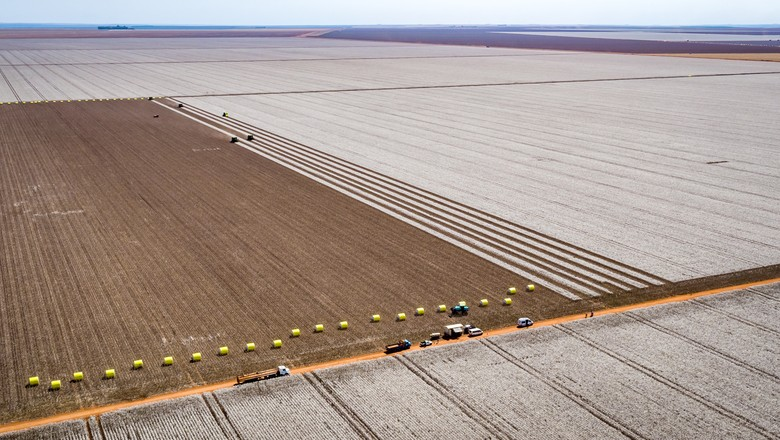 empresas-amaggi-colheita-algodao (Foto: AMaggi)
