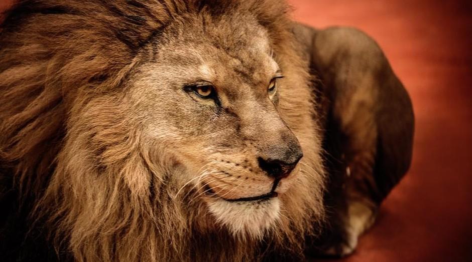 Leão do Imposto de Renda (Foto: Shutterstock)