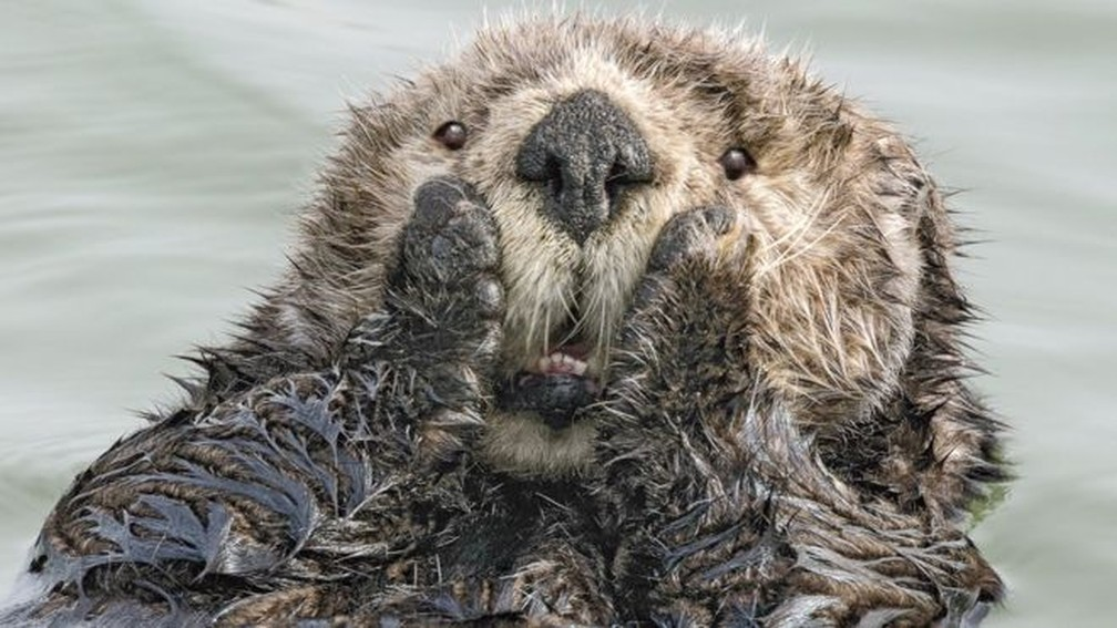 A competição de fotografias Comedy Wildlife Photography Awards acaba de anunciar seus 40 finalistas da edição de 2019, e uma delas é esta imagem, 'Oh My' (algo como 'Meu Deus'), de Harry Walker — Foto: Harry M. Walker/Comedy Wildlife Photografy Awards