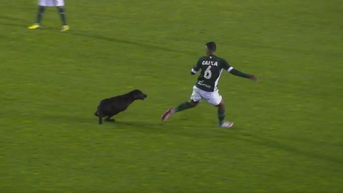 Brasil de Pelotas x Goiás, cachorro, Juninho, gol (Foto: Reprodução / Premiere)