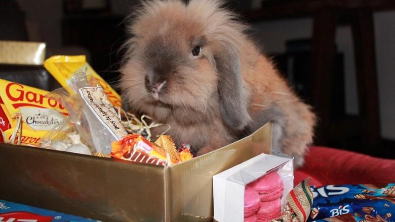 O coelho Kimi fazendo pose na época da Páscoa  (Foto: Mariana Barros/ Arquivo Pessoal)