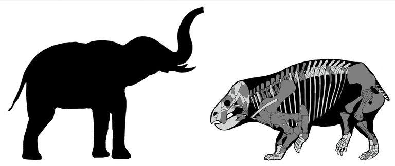 Esqueleto da Lisowicia bojani, à direita; e comparação do tamanho de um elefante moderno, à esquerda.  (Foto: KAROLINA SUCHAN-OKULSKA)