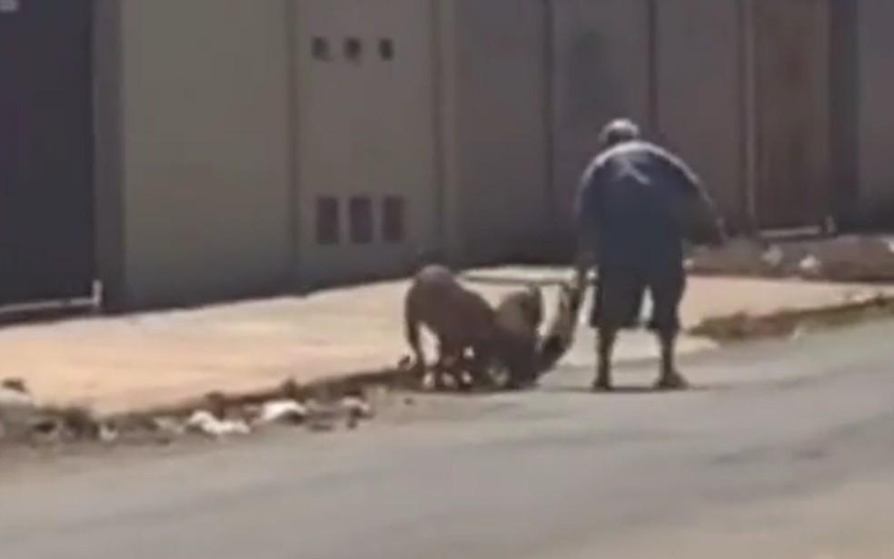 Imagens mostram maus tratos a cachorra pequena — Foto: Reprodução/TV Anhanguera