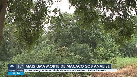 Macaco é encontrado morto em Morro da Fumaça; Dive investiga suspeita de febre amarela