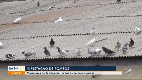 Infestação de pombos causa preocupação entre moradores de Teixeira de Freitas