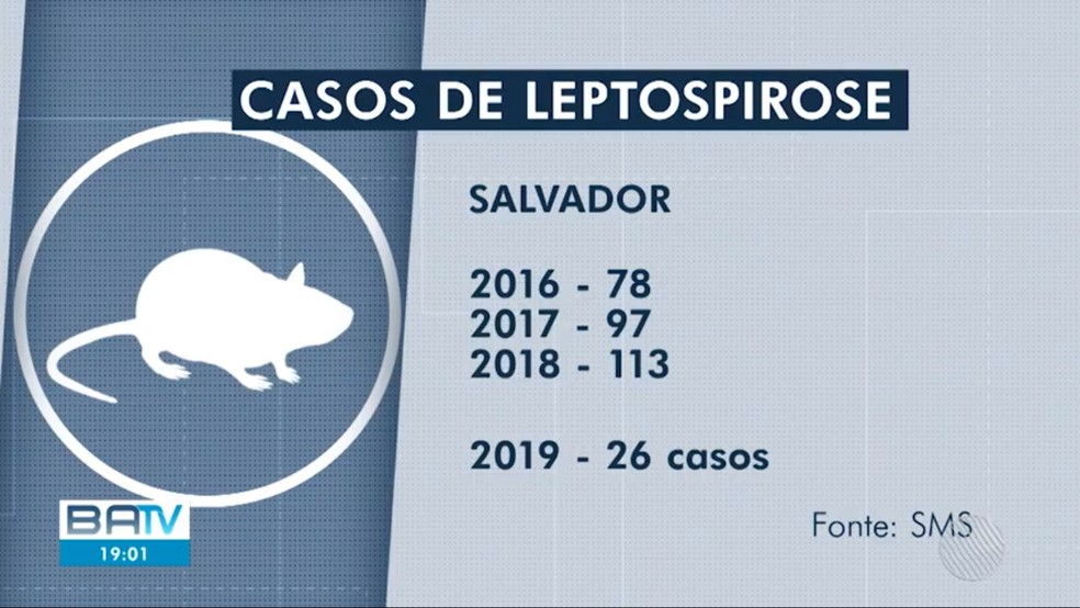 Salvador tem 26 registros de leptospirose  — Foto: TV Bahia