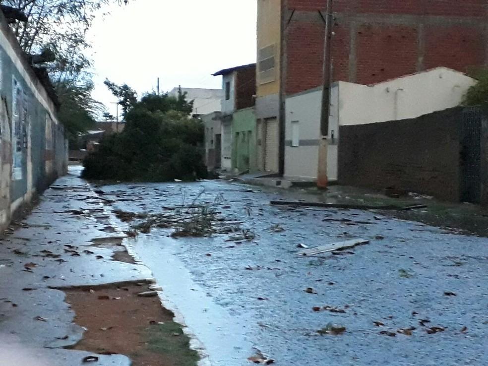 Árvores caíram em toda a cidade (Foto: Gustavo Almeida/Arquivo pessoal)