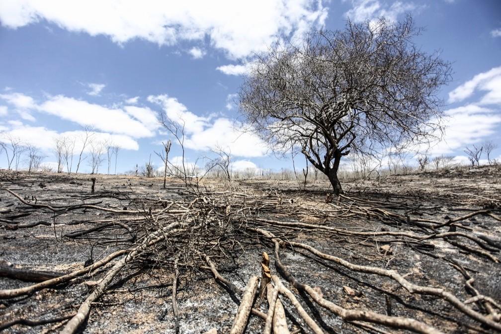 Desmatamento no interior de Alagoas — Foto: Jonathan Lins/FPI do São Francisco