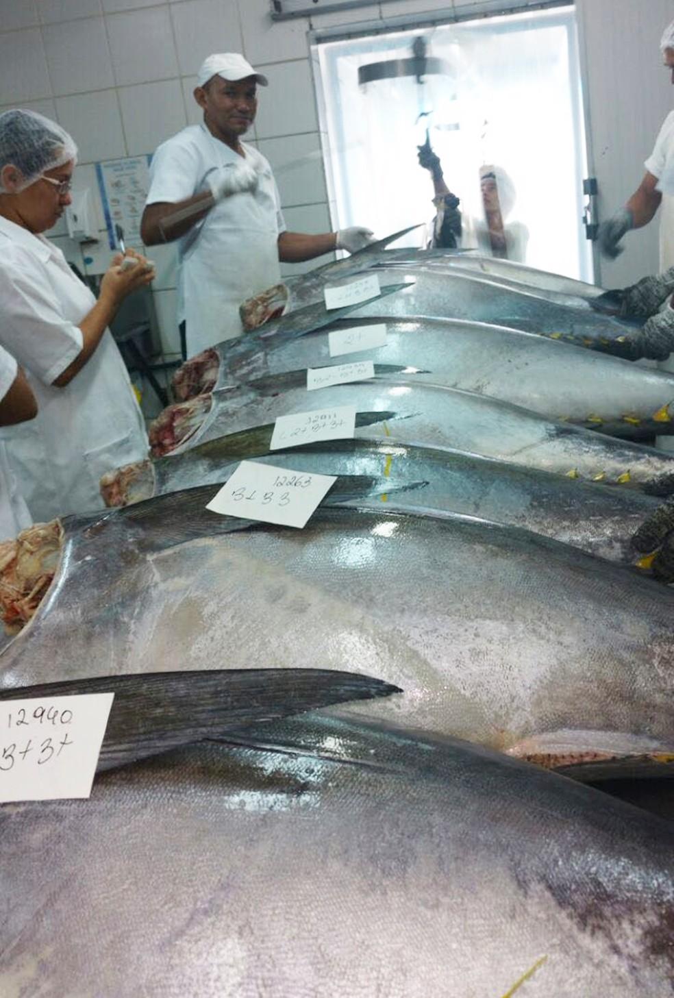 O quilo do atum nobre, no mercado, custa em média R$ 30 — Foto: Cedida/Everton Padilha