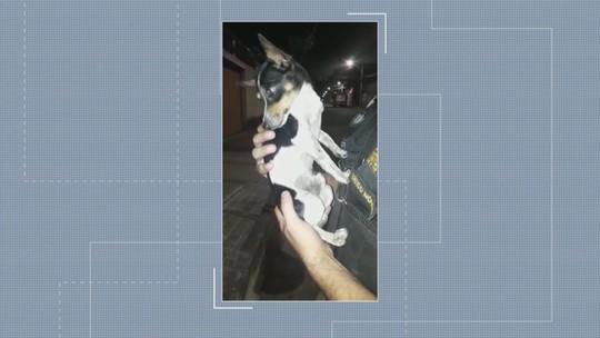 Cachorro é resgatado por PM e ganha nome de 'Mike Patrulha' em Belo Horizonte
