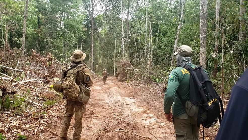 Operação da PF ocorreu em conjunto com Ibama e Corpo de Bombeiros.  — Foto: PF/Divulgação