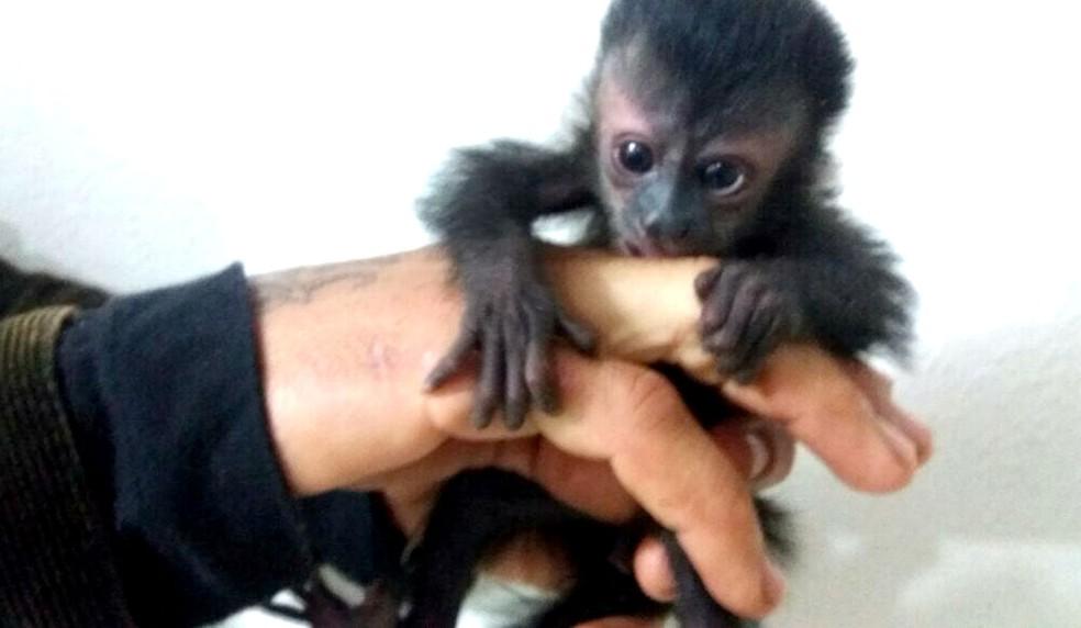 Filhotes serão avaliados por veterinários para posteriormente voltarem á natureza (Foto: Divulgação/Polícia Rodoviária Federal)
