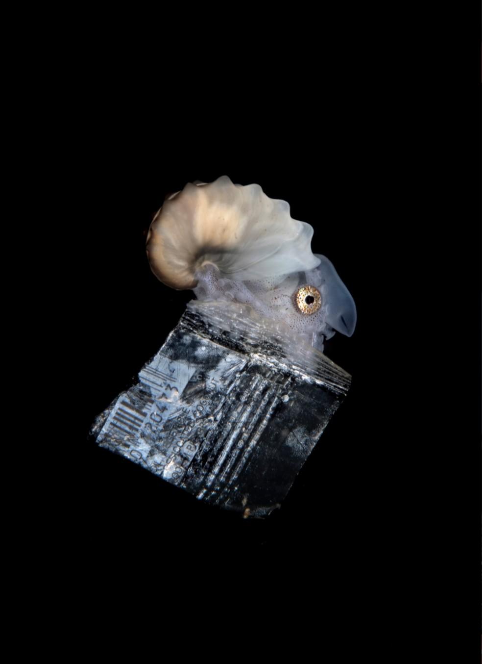 Um molusco flutua sobre um pedaço de lixo. Imagem ganhou o 3° lugar na premiação sobre fotografia da vida marinha — Foto: Ocean Photography Awards   Steven Kovacs
